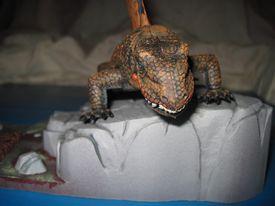 Sialback Reptile